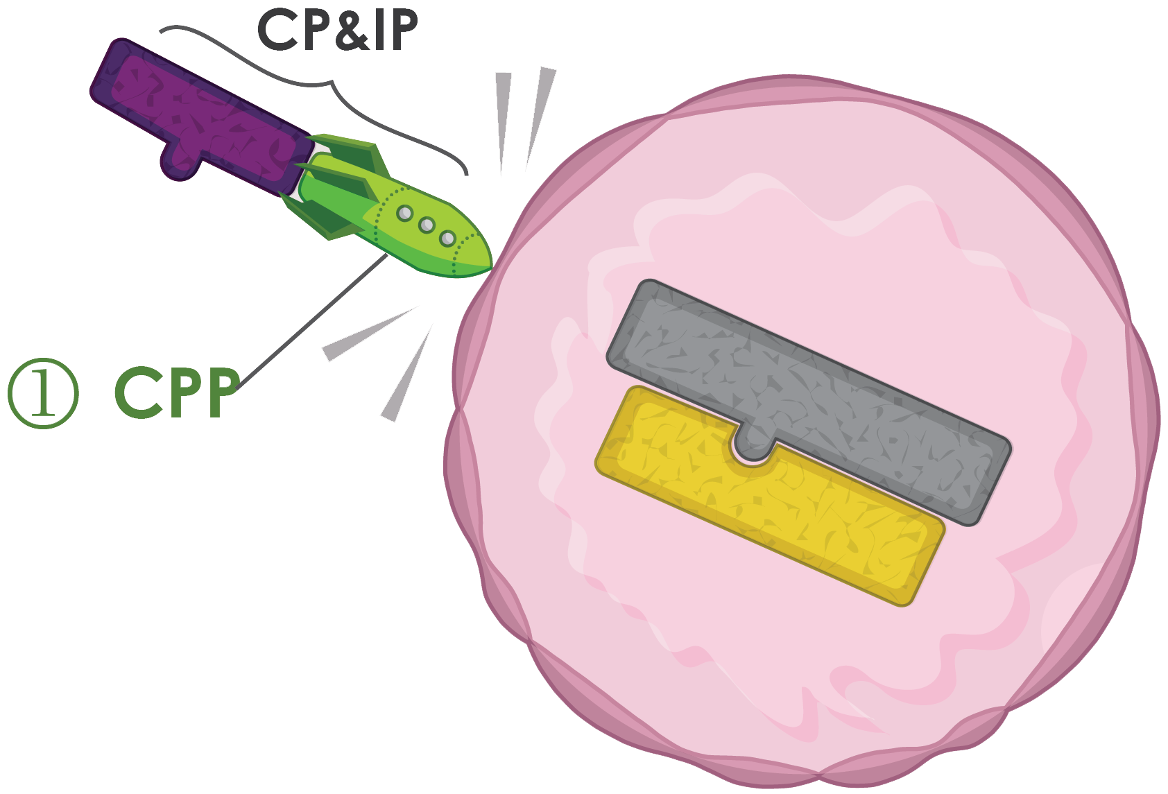 Cp&IP image